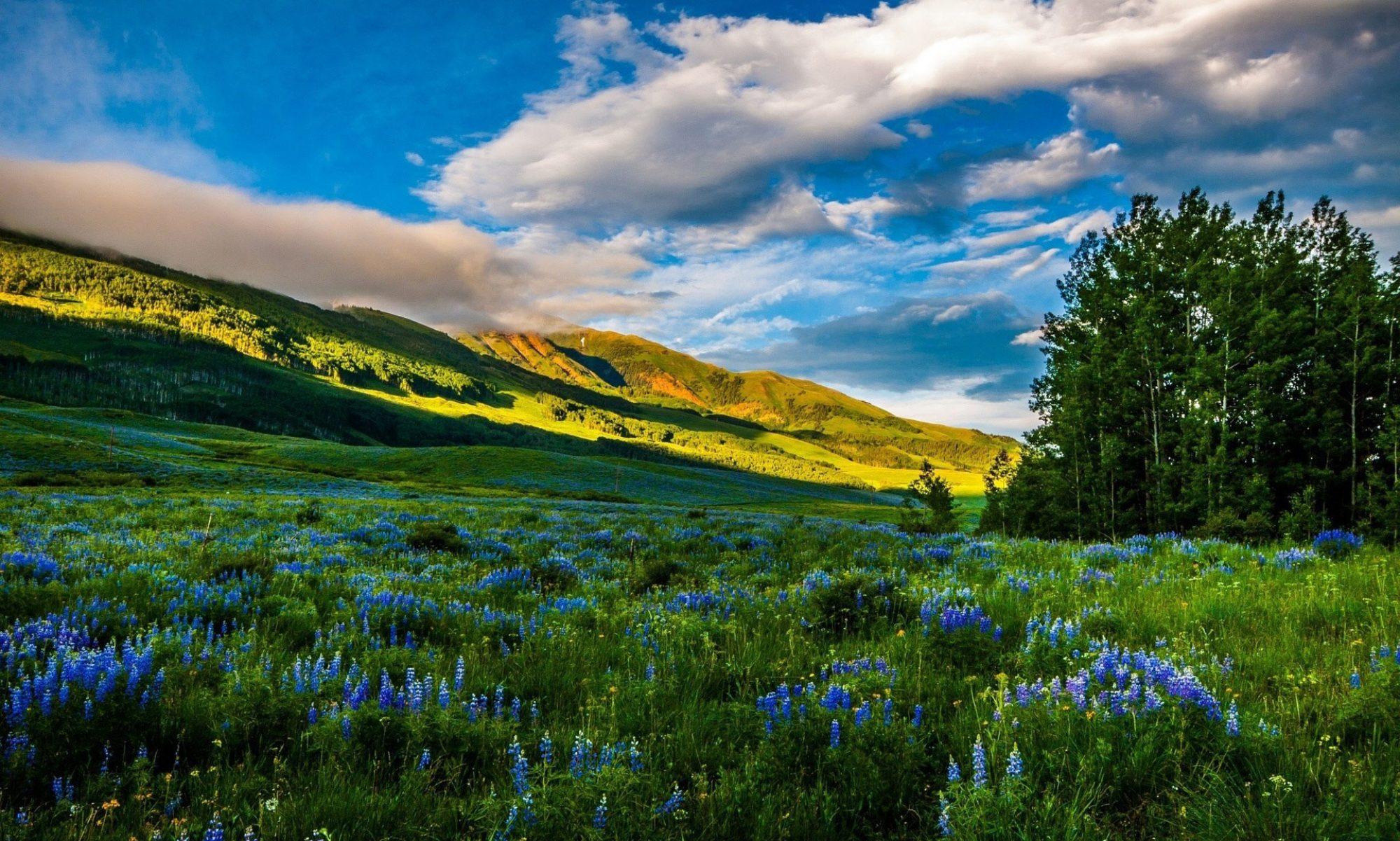 Совет по сохранению природного наследия нации